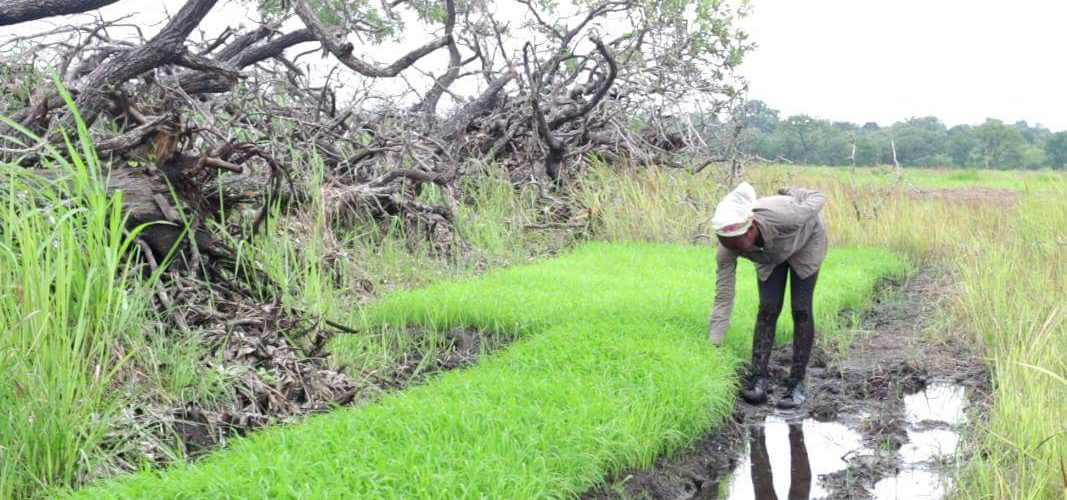 Water Conservation: Key to Sustainable Food Production