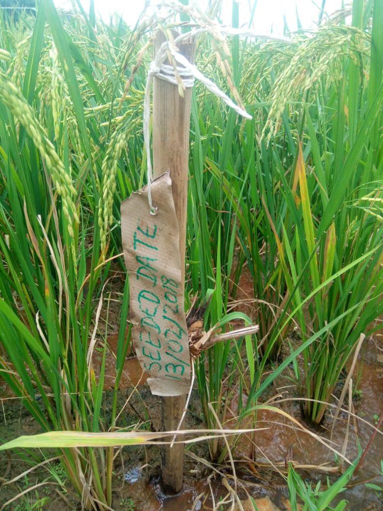 SOIL ANALYSIS? – Analyse Your Soil Now!