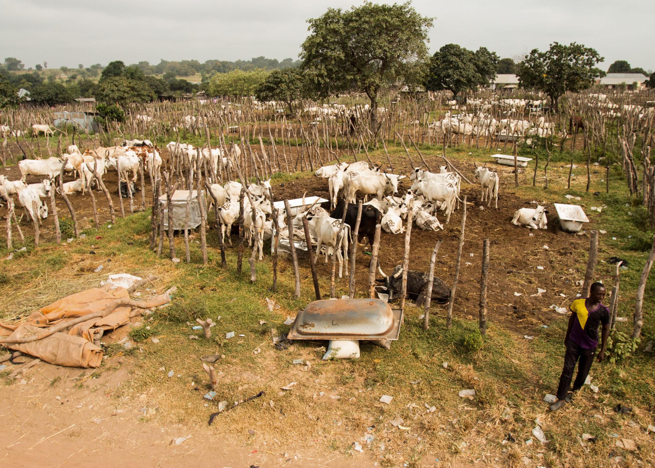 Rural Grazing Area
