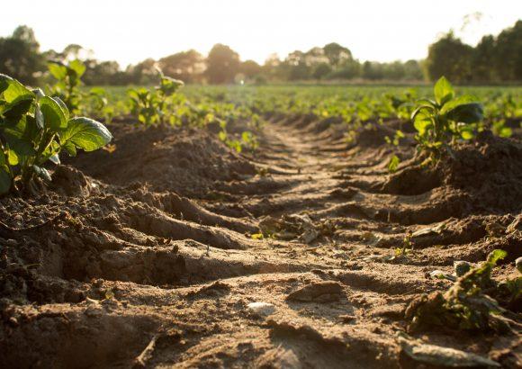SUSTAINABLE SOIL MANAGEMENT: SOIL TESTING