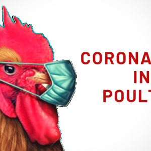 CORONAVIRUS IN POULTRY