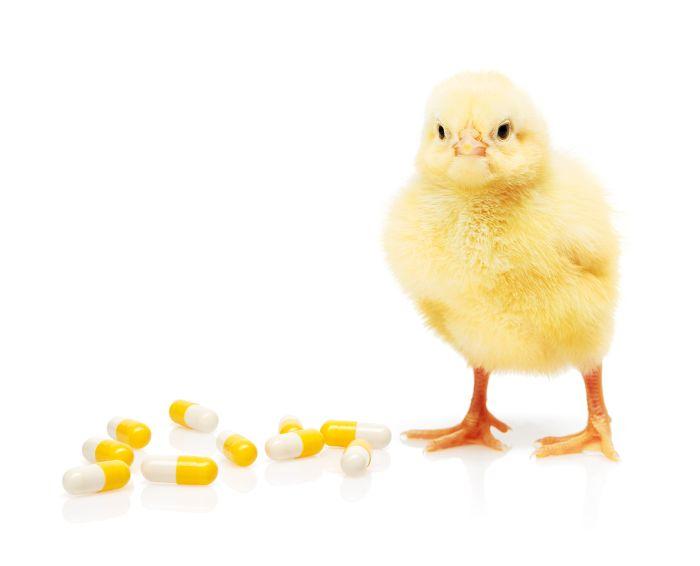 HOW TO MAINTAIN ANIMAL PERFORMANCE WHILE REDUCING ANTIBIOTICS?