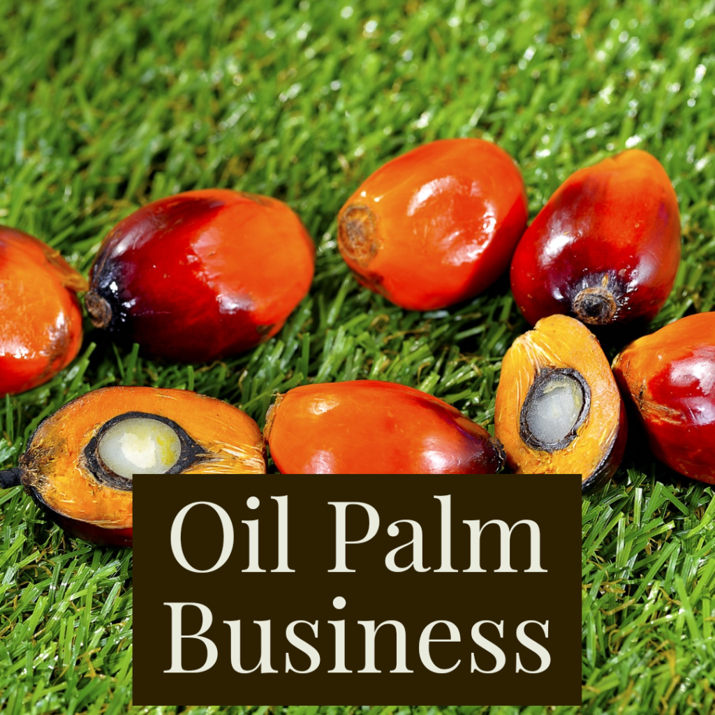 oil palm business