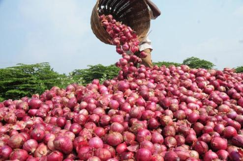 Onion Farming: The practical guide